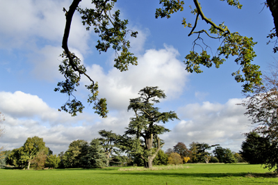 West Suffolk Parks open to be enjoyed responsibly